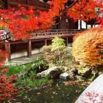京都の紅葉見頃はいつ?混雑で失敗しない回避方法!