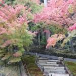 比叡山の紅葉の見ごろは?ドライブウェイからの雲海が絶景過ぎた