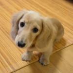 犬が自分のしっぽを噛んで回るのはなぜ?原因と治し方