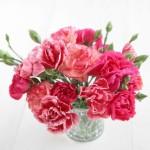 母の日プレゼントの花は生花VSプリザーブドフラワーどっち?!