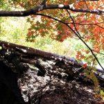 京都嵐山のおすすめひっそり紅葉スポットと混雑を避けるポイント